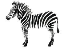 Watercolor illustration of a zebra Stock Image