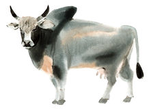 Watercolor illustration of zebu in white background. Royalty Free Stock Image