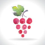 Watercolor illustrations of grapes Stock Photography