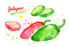 Watercolor illustrations of jalapeno pepper. With paint smudges and splashes Royalty Free Stock Photo