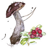 Watercolor illustrations of a mushroom with berry Royalty Free Stock Images
