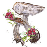 Watercolor illustrations of mushrooms Royalty Free Stock Images
