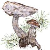 Watercolor illustrations of mushrooms Royalty Free Stock Photos