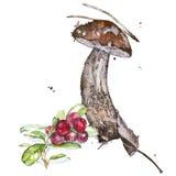 Watercolor illustrations of mushrooms Royalty Free Stock Photo
