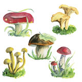 Watercolor illustrations of mushrooms Stock Photography