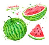 Watercolor illustrations set of watermelon. Watercolor illustrations set of half, sliced and whole watermelon with seeds and paint splashes Royalty Free Stock Photography