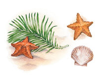 Watercolor illustrations of shells and starfish Royalty Free Stock Photography