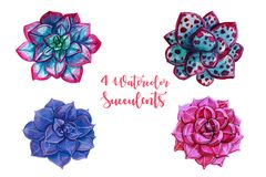 Watercolor illustrations - succulents clipart. All elements are isolated. Perfect for Wedding invitation, greeting card, postcard, poster, textile, print etc Royalty Free Stock Photos