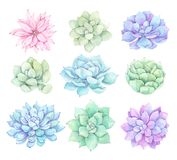 Watercolor illustrations - succulents clipart. Succulent. And cactus collection. Perfect for Wedding invitation, greeting card, postcard, poster, textile, print vector illustration