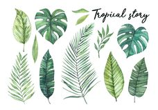 Free Watercolor Illustrations. Summer Tropical Design Elements. Tropi Royalty Free Stock Images - 120564289