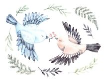 Watercolor illustrations. Two cute birds with green branches and royalty free illustration