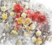Watercolor Image Of Begonia Flowers Stock Photo