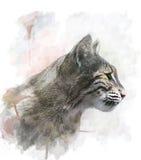 Watercolor Image Of  Bobcat. Watercolor Digital Painting Of Bobcat Royalty Free Stock Photography