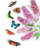 Watercolor Image Of Butterfly Bush Royalty Free Stock Photos