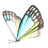 Watercolor image of a butterfly on a white background. Royalty Free Stock Photography