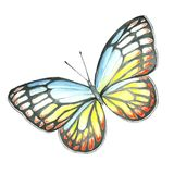 Watercolor image of a butterfly on a white background. Stock Photo