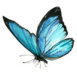 Watercolor image of a butterfly on a white background. Royalty Free Stock Images