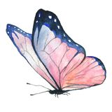 Watercolor image of a butterfly on a white background. Stock Photos