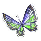 Watercolor image of a butterfly on a white background. Royalty Free Stock Photos