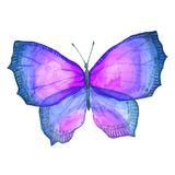Watercolor image of a butterfly on a white background. Royalty Free Stock Photo