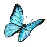 Watercolor image of a butterfly on a white background. Royalty Free Stock Image