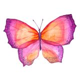 Watercolor image of a butterfly on a white background. Stock Photography