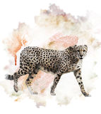 Watercolor Image Of Cheetah Royalty Free Stock Photos