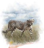 Watercolor Image Of Cheetah. Watercolor Digital Painting Of  Walking Cheetah Stock Photos
