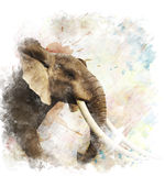 Watercolor Image Of Elephant vector illustration