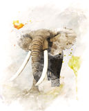 Watercolor Image Of Elephant. Watercolor Digital Painting Of   Walking Elephant Stock Images