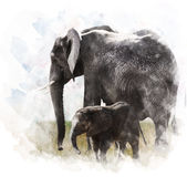 Watercolor Image Of  Elephants Royalty Free Stock Photography