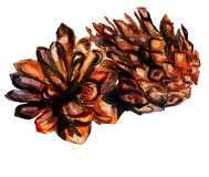 Watercolor image of fir cone on white background. With splashes of paint Stock Photography