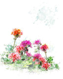 Watercolor Image Of  Geranium Flowers Royalty Free Stock Photos