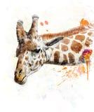 Watercolor Image Of Giraffe Stock Photography