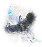 Watercolor Image Of  Great Blue Heron Royalty Free Stock Photo