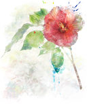 Watercolor Image Of  Hibiscus Flower Royalty Free Stock Images