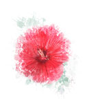 Watercolor Image Of Hibiscus Flower Stock Photo