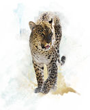Watercolor Image Of  Leopard Royalty Free Stock Image