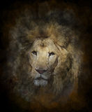 Watercolor Image Of Lion Stock Photo