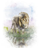 Watercolor Image Of   Lion Royalty Free Stock Photography