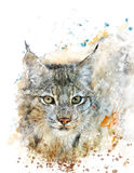 Watercolor Image Of Lynx Stock Images