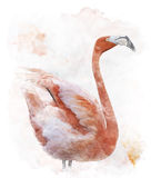 Watercolor Image Of Flamingo Bird Stock Photography