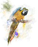 Watercolor Image Of Parrot Stock Photography