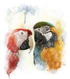 Watercolor Image Of  Parrots Royalty Free Stock Photo