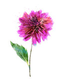 Watercolor Image Of Pink Dahlia Stock Image