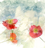 Watercolor Image Of  Poppy Flowers Stock Photography