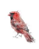 Watercolor Image Of Red Cardinal Stock Photo