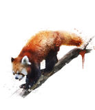 Watercolor Image Of  Red Panda Stock Photos
