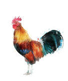 Watercolor Image Of Rooster Stock Images