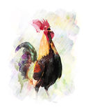 Watercolor Image Of  Rooster Royalty Free Stock Photo